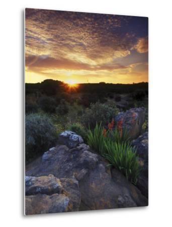 Wildflowers and Sunset at Cederberg Wilderness Area, South Africa-Keith Ladzinski-Metal Print