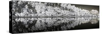 Infrared Digital Image of Kapuaiwa Palm Grove from Low Tide Shoreline-Richard A. Cooke Iii.-Stretched Canvas Print