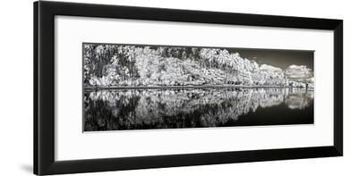 Infrared Digital Image of Kapuaiwa Palm Grove from Low Tide Shoreline-Richard A. Cooke Iii.-Framed Photographic Print