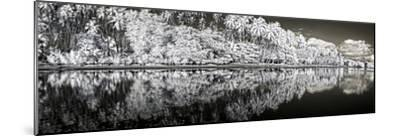 Infrared Digital Image of Kapuaiwa Palm Grove from Low Tide Shoreline-Richard A. Cooke Iii.-Mounted Photographic Print