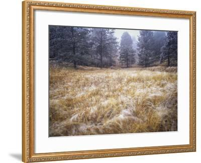 Foggy Forest with Meadow, Pike National Forest, Colorado-Keith Ladzinski-Framed Photographic Print