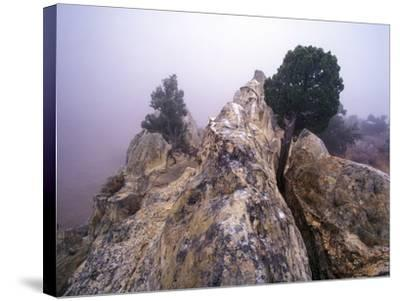 Foggy Morning at Garden of the Gods, Colorado-Keith Ladzinski-Stretched Canvas Print