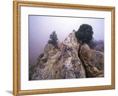 Foggy Morning at Garden of the Gods, Colorado-Keith Ladzinski-Framed Photographic Print