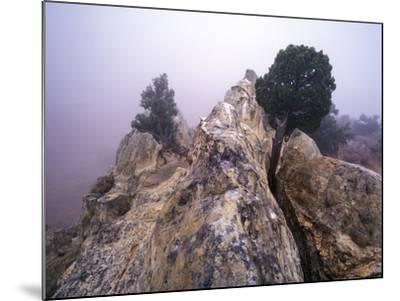 Foggy Morning at Garden of the Gods, Colorado-Keith Ladzinski-Mounted Photographic Print