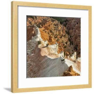 A High Angle View of Hoodoos in Cedar Breaks National Monument, a Natural Amphitheater-Babak Tafreshi-Framed Photographic Print