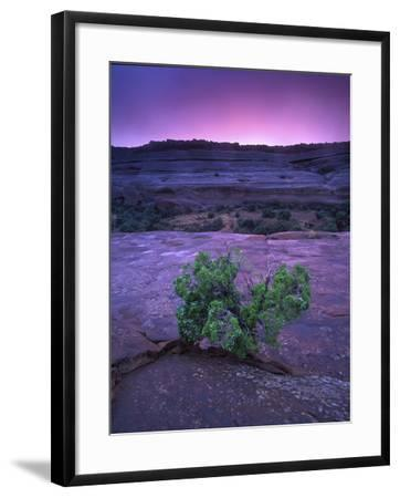 A Lone Juniper Grows Out of Sandstone in the Foreground of a Colorful Sunset-Keith Ladzinski-Framed Photographic Print