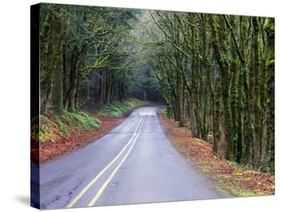 View of the Historic Columbia River Highway-Keith Ladzinski-Stretched Canvas Print