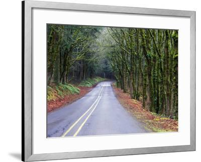 View of the Historic Columbia River Highway-Keith Ladzinski-Framed Photographic Print