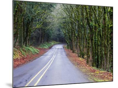 View of the Historic Columbia River Highway-Keith Ladzinski-Mounted Photographic Print