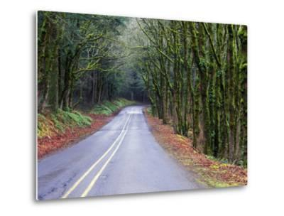 View of the Historic Columbia River Highway-Keith Ladzinski-Metal Print