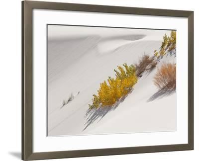 Cottonwood Trees with Fall Color and Salt Cedar in White Sands National Monument-Derek Von Briesen-Framed Photographic Print