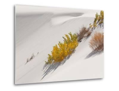 Cottonwood Trees with Fall Color and Salt Cedar in White Sands National Monument-Derek Von Briesen-Metal Print