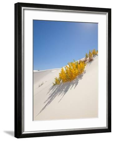 Cottonwood Trees with Fall Color in White Sands National Monument-Derek Von Briesen-Framed Photographic Print