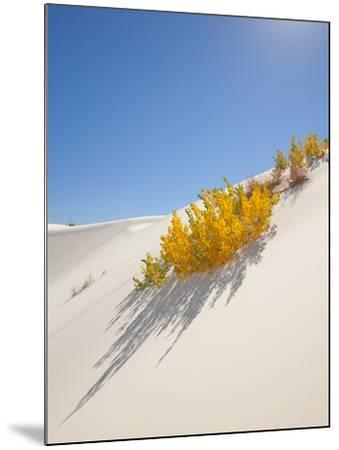 Cottonwood Trees with Fall Color in White Sands National Monument-Derek Von Briesen-Mounted Photographic Print