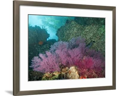 A Coral Formation-Cesare Naldi-Framed Photographic Print