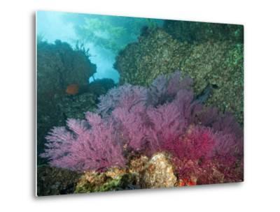 A Coral Formation-Cesare Naldi-Metal Print