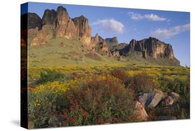 Wildflowers and Cliffs in Desert-DLILLC-Stretched Canvas Print
