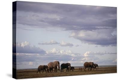 Elephant Family-DLILLC-Stretched Canvas Print