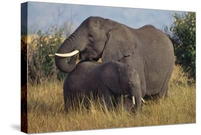 Adult and Young Elephant-DLILLC-Stretched Canvas Print