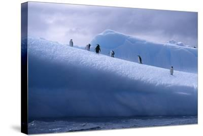 Chinstrap Penguins Standing on Ice-DLILLC-Stretched Canvas Print