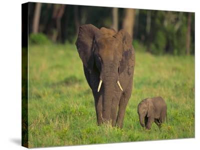 African Elephant and Calf in Grass-DLILLC-Stretched Canvas Print