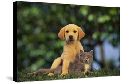 Puppy with Kitten-DLILLC-Stretched Canvas Print
