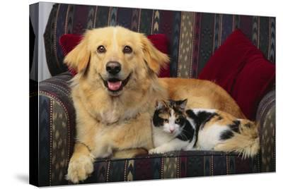 Dog and Cat Sitting in a Chair-DLILLC-Stretched Canvas Print