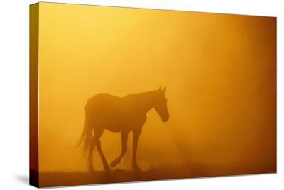 Wild Horse-DLILLC-Stretched Canvas Print