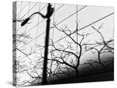 Shadow Post-Dean Forbes-Stretched Canvas Print