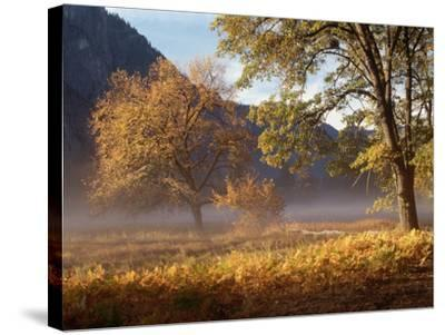Yosemite Valley in Fall Foliage-Craig Lovell-Stretched Canvas Print