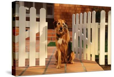 Dog Waving Goodbye from Gate-DLILLC-Stretched Canvas Print