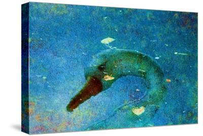 Swan-Andr? Burian-Stretched Canvas Print