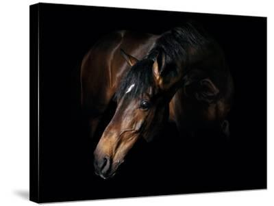 Horse-Fabio Petroni-Stretched Canvas Print