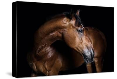 Horse-Fabio Petroni-Stretched Canvas Print