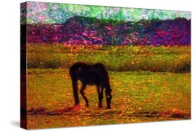 Horse--Stretched Canvas Print