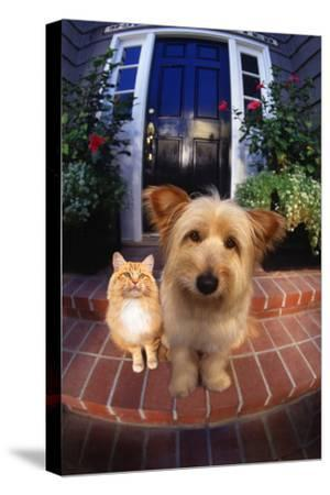 Terrier and Orange Tabby Waiting on Front Stoop-DLILLC-Stretched Canvas Print