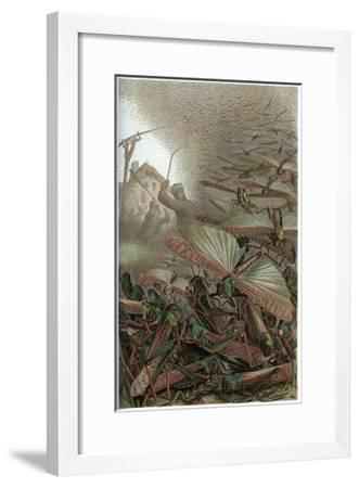 The Migratory Locust by Alfred Edmund Brehm-Stefano Bianchetti-Framed Giclee Print