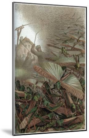 The Migratory Locust by Alfred Edmund Brehm-Stefano Bianchetti-Mounted Giclee Print