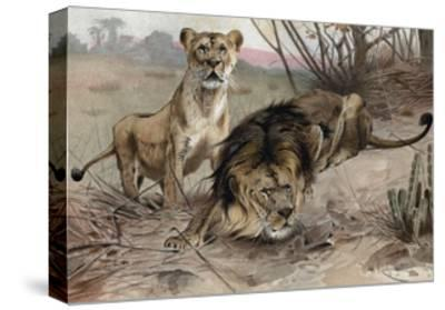 The Lion by Alfred Edmund Brehm-Stefano Bianchetti-Stretched Canvas Print