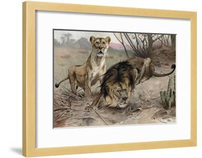 The Lion by Alfred Edmund Brehm-Stefano Bianchetti-Framed Giclee Print