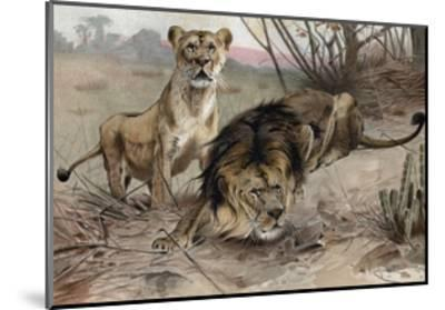 The Lion by Alfred Edmund Brehm-Stefano Bianchetti-Mounted Giclee Print