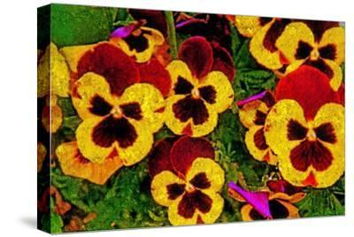 Pansies-Andr? Burian-Stretched Canvas Print