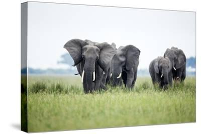 An Elephant Herd in Grassland-Richard Du Toit-Stretched Canvas Print