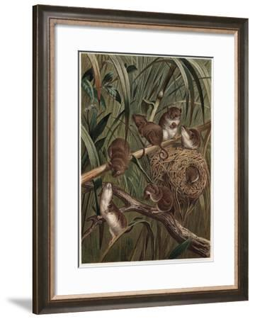 Eurasian Harvest Mouse by Alfred Edmund Brehm-Stefano Bianchetti-Framed Giclee Print
