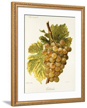 Gradiska Grape-A. Kreyder-Framed Giclee Print