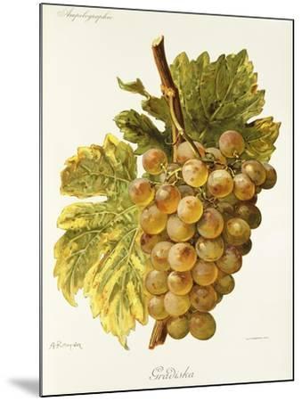 Gradiska Grape-A. Kreyder-Mounted Giclee Print