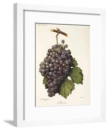 Mission Grape-A. Kreyder-Framed Giclee Print