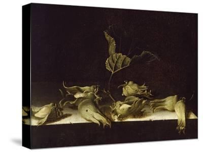 Still Life with Hazel-Nuts, 1696-Adrian Coorte-Stretched Canvas Print