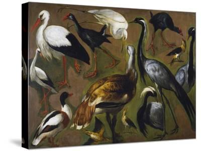 Study of Birds, by Alexandre-Francois Desportes (1661-1743), France, 18th Century-Alexandre-Francois Desportes-Stretched Canvas Print