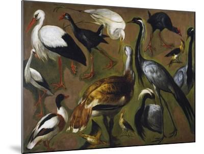 Study of Birds, by Alexandre-Francois Desportes (1661-1743), France, 18th Century-Alexandre-Francois Desportes-Mounted Giclee Print